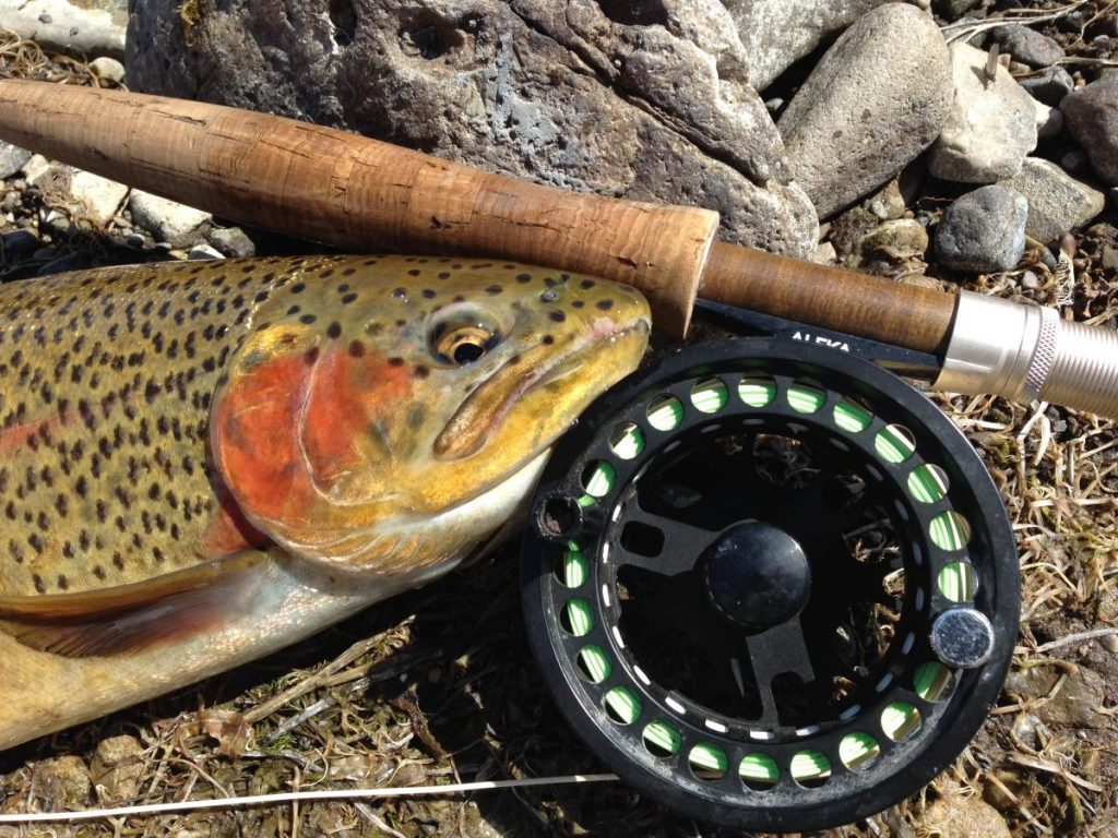 browne lake utah fishing guide